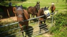 DSM building envelope contractor in Yorkshire charity work with Free Rein Horse Rescue