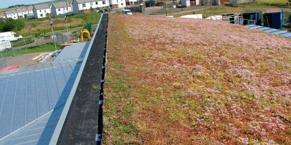 Long term green roof waterproof enveloping contract carried out by DSM Ltd in Yorkshire at Windygoul School